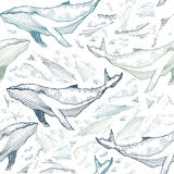 Whales seamless pattern. Animal background. Vector illustration Stock Photo