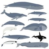 Whales Royalty Free Stock Photos