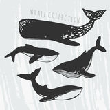Whales' silhouettes set. Illustration of different whales: cachalot, orca, big blue whale Stock Photos