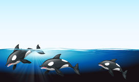 Whales swimming under the sea Royalty Free Stock Image