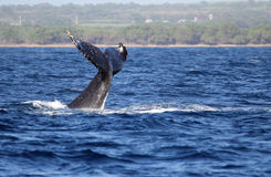 Whales tail Royalty Free Stock Images