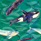 Whales variety: Blue, Killer Whale or Orca and Sperm or Cachalot, hand painted watercolor illustration, seamless pattern on green. Ocean surface with waves Royalty Free Stock Photography