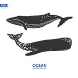 Whales  on white Royalty Free Stock Photography