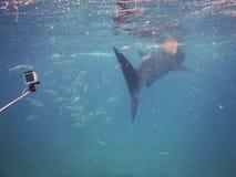 Whalesharks Stock Photo