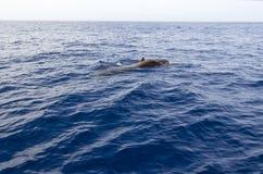Whalewatching Stockbilder