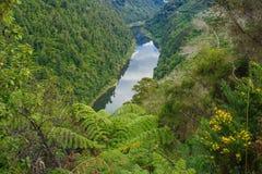 Whanganui-Fluss Lizenzfreies Stockfoto