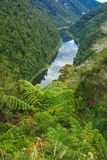 Whanganui River Stock Photography