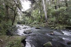 Whangarei Fälle, Neuseeland lizenzfreies stockbild