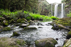 Whangarei Falls, New Zealand Royalty Free Stock Images