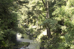 Whangarei Falls and Scenic Reserve Royalty Free Stock Photo