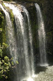 Whangarei-Wasserfälle Stockbilder