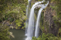 Whangarei Waterfalls Stock Image