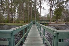 Wharf or dock by lake. An old green wharf beside a lake surrounded by florida trees stock images