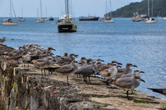 What are those birds looking at?! Portobelo, Panama Stock Image