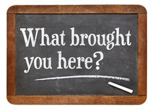 What brought you here? royalty free stock photography