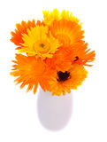 What A calendula!. Bouquet of calendula flowers in white vase Stock Photography