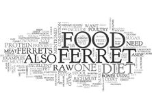 What Do Ferrets Eatword Cloud. WHAT DO FERRETS EAT TEXT WORD CLOUD CONCEPT Stock Photo
