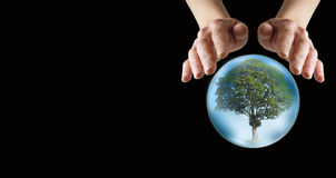 What does the future hold for our trees Royalty Free Stock Photo