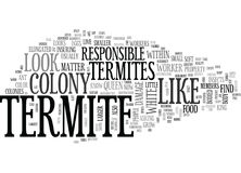 What Does A Termite Look Likeword Cloud Stock Photos