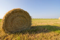 What The Hay? Royalty Free Stock Photography