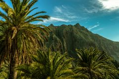 Tropical Paradise With Palm Trees in A Tropical Island. What if places like this were growing more around the world ? Tenerife Island Stock Images