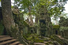 Ta Prohm Temple ruins Cambodia Siem Reap royalty free stock photo
