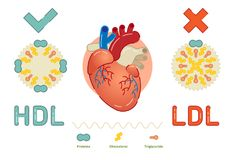 What is Lipoprotein - illustrated explanation. Lipoprotein is a biochemical assembly whose purpose is to transport fat molecules in blood Stock Photos