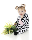 What`s a Cow to Do? Royalty Free Stock Photos