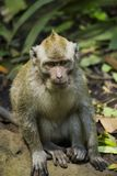 What`s up Monkey royalty free stock image