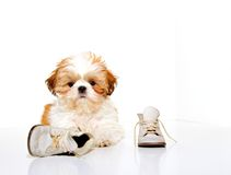 What Shoes? Royalty Free Stock Images