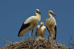 What are storks doing with their spare time stock photography