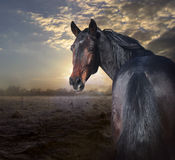 What there?. Magnificent horse against a water meadow Royalty Free Stock Photo