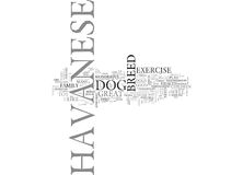 What To Expect From A Havaneseword Cloud. WHAT TO EXPECT FROM A HAVANESE TEXT WORD CLOUD CONCEPT royalty free illustration