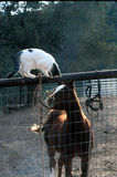 What to play?. Cat and young horse wanting to play royalty free stock photo