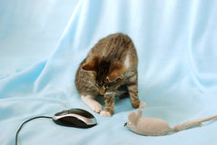 What too strange mouse ! Stock Image
