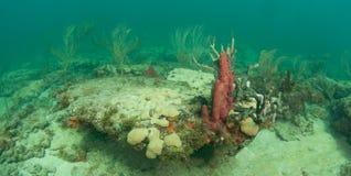 What typical Atlanitc reef looks like Stock Image
