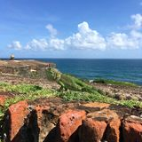 A green iquana sunbathes near the Spanish forts of Old San Juan, Puerto Rico stock image