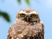 What are you looking at?. View of an owl observing the camera Stock Photo
