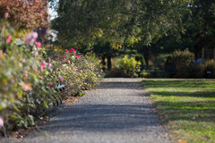What is your Path?. Where are you going in life, what is your pathway Royalty Free Stock Images