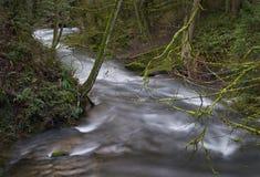 Whatcom小河,太平洋西北地区, Bellingham,华盛顿 图库摄影