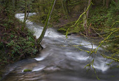 Whatcom Creek, Pacific Northwest, Bellingham, Washington Stock Photography