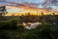 Whatipu regionalności park zdjęcie stock