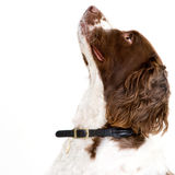 Whats up there? Royalty Free Stock Photography