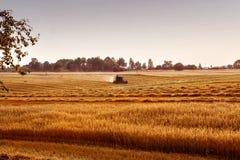 Whe maturo dorato di raccolto meccanico di agricoltura della mietitrebbiatrice Fotografie Stock