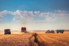 Whe maturo dorato di raccolto meccanico di agricoltura della mietitrebbiatrice Immagine Stock