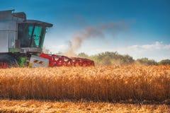 Whe maturo dorato di raccolto meccanico di agricoltura della mietitrebbiatrice Immagine Stock Libera da Diritti