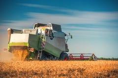 Whe maturo dorato di raccolto meccanico di agricoltura della mietitrebbiatrice Immagini Stock Libere da Diritti