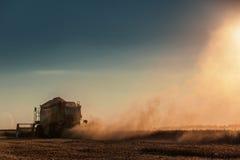 Whe maturo dorato di raccolto meccanico di agricoltura della mietitrebbiatrice Immagini Stock