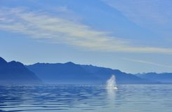 Wheal spout in seascape. Wheal is spouting in quiet calm beautiful seascape Alaska Royalty Free Stock Image