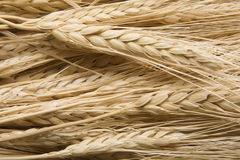 Free Wheat Royalty Free Stock Image - 11495806